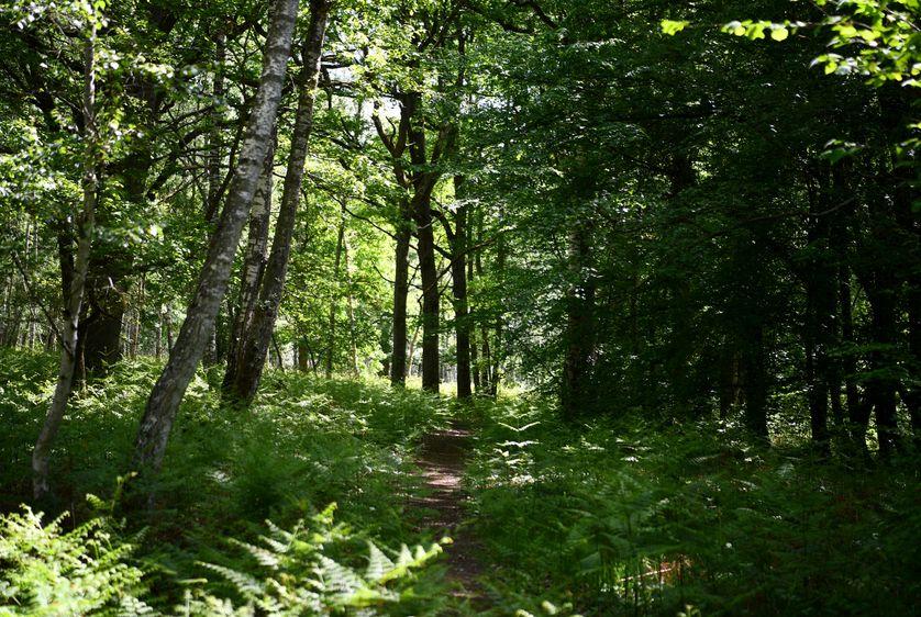 Quelle gestion durable pour nos forêts ?