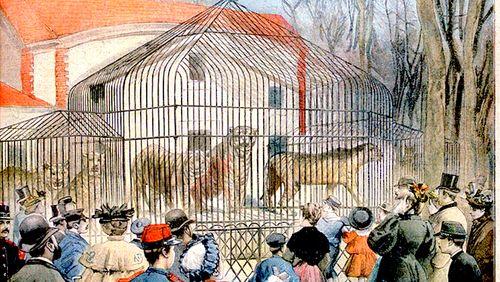 """Yannick Le Marec : """"Le tigre arrive en France pour montrer la richesse des terres conquises"""""""