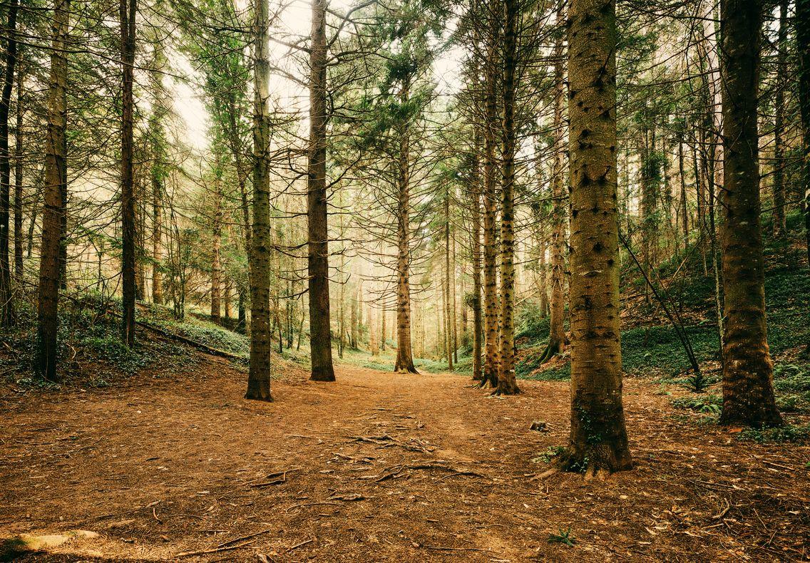 La forme des arbres en forêt