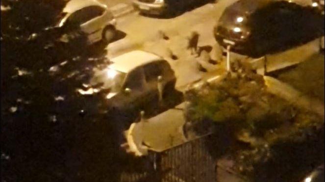 VIDÉO - Une famille de sangliers se promène au pied d'une résidence dans le 10e arrondissement de Marseille