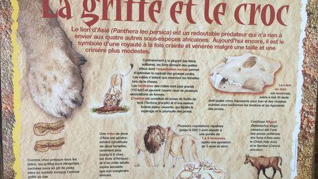 Un été au zoo de Mulhouse: la zoopédagogie