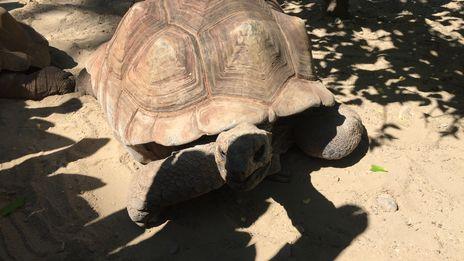 Un été au zoo de Mulhouse: le financement des programmes de conservation des espèces