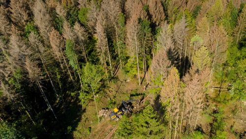 Épisode 3 : Des forêts en vie
