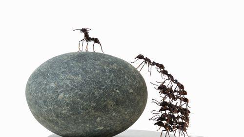 Coopérer ou s'opposer, un dilemme évolutif