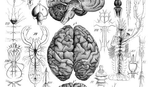 Neurones : connexion en cours