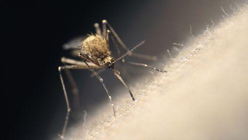 Le paludisme fait de la résistance en Afrique