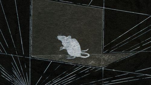 Épisode 3 : Des souris et des hommes… de science