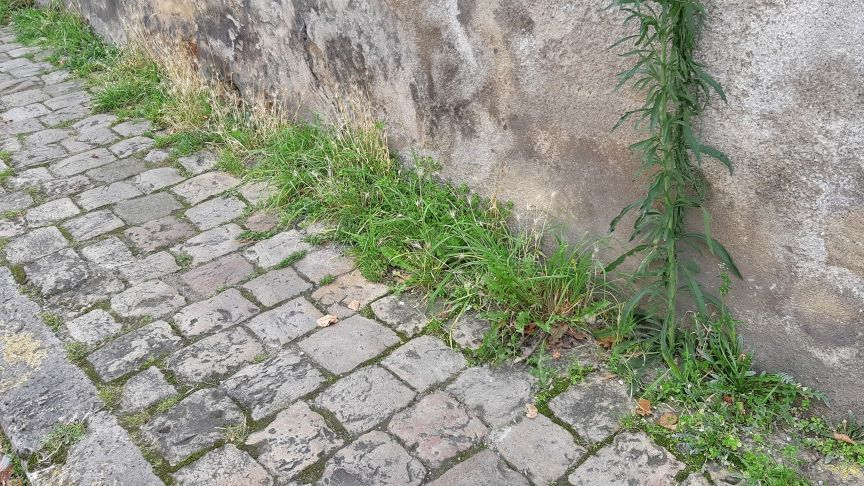 St-Amand-Montrond : les habitants devront désherber leur trottoir sinon ils paieront la facture