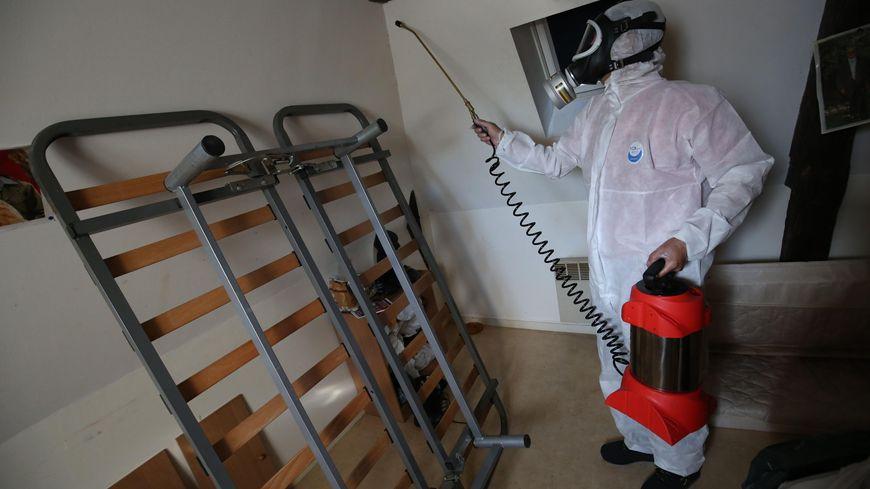 Une invasion de punaises de lit perturbe l'hébergement d'urgence dans les Pyrénées-Orientales